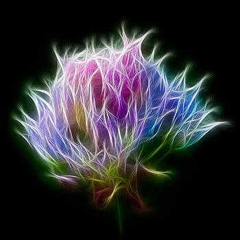 Adam Romanowicz - Color Burst