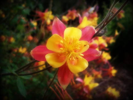 Color Burst by Heather L Wright