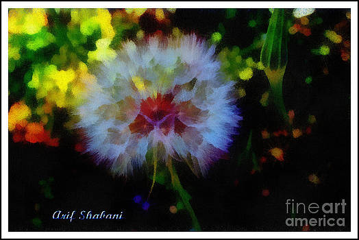 Color Dandelion  by Arif Zenun Shabani