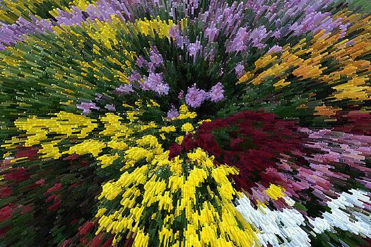 Color Explosion by Wanda Brandon
