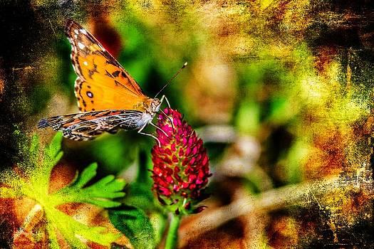 Barry Jones - Butterfly - Macro - Color in Clover