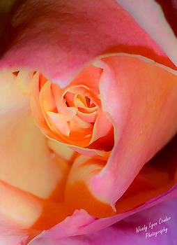 Color of Rose by Wendy Lynn Conder