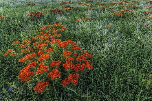 Scott Bean - Color on the Prairie