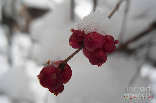 Color the Snow by Mada Lina