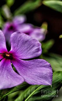 Color by Vineesh Edakkara