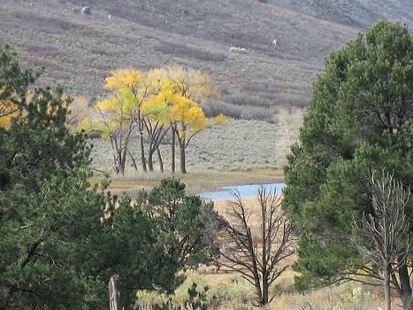 Colorado 1 by Paul Thomas