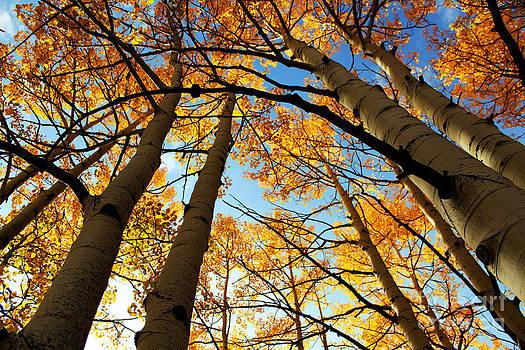 Kate Avery - Colorado Autumn