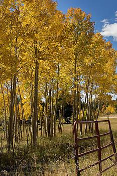 Colorado Colors by Linda Storm