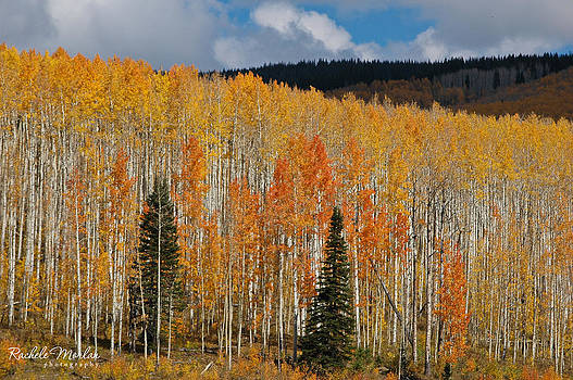 Colorado Fall Colors by Rachele Morlan