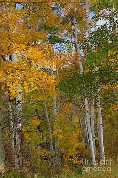 Bob Hislop - Colorado Gold