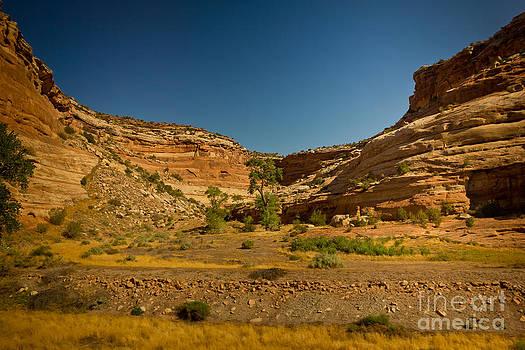 Colorado Green by Mathew Tonkin Henwood