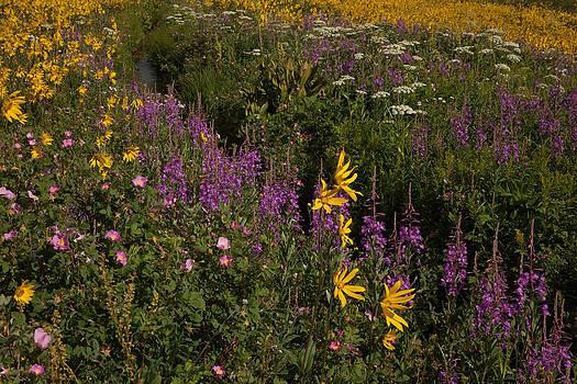 Susan Rovira - Colorado Summertime