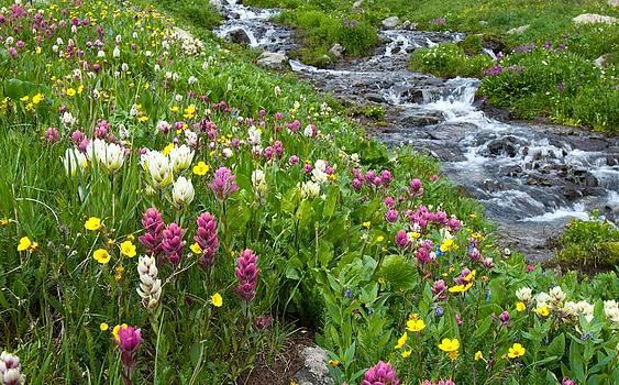 Colorado Wildflower Meadow and Stream by Cascade Colors