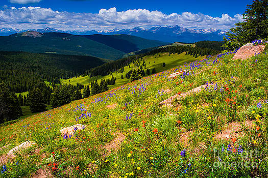 Colorado Wildflowers by Peter Castricone