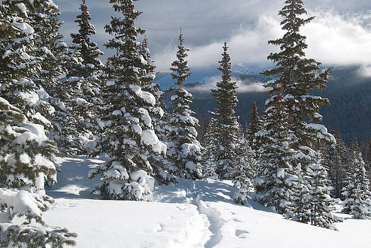 Colorado Winter Morning Forest with Rising Clouds by Cascade Colors