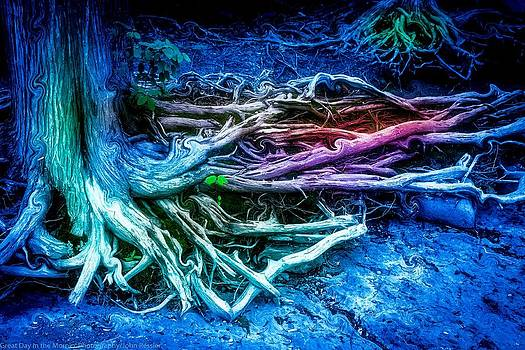 Colored Forest by John Ressler