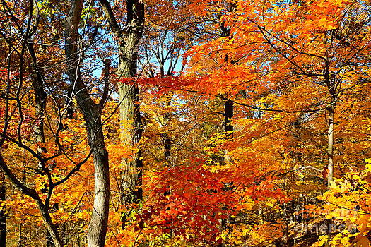 ColorFall Trees by Jay Nodianos