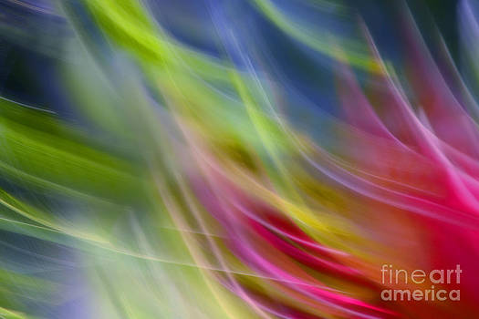 Colorful abstraction by Lilianna Sokolowska