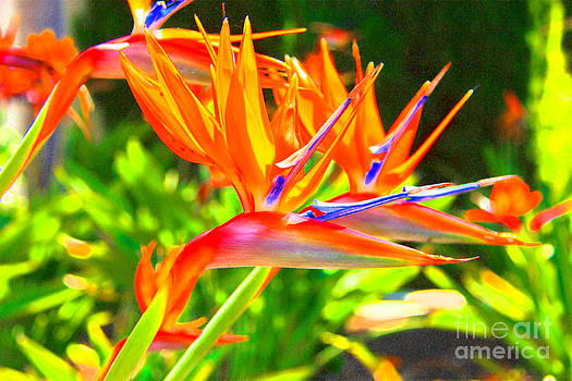 Colorful Birds of Paradise by David Doucot