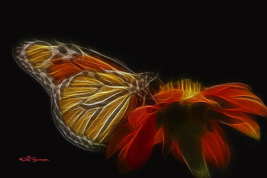 Colorful Butterfly by Jeff Swanson