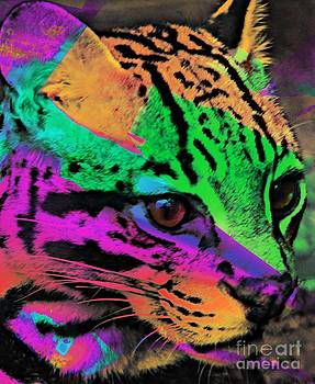 Colorful Cat by Kathleen Struckle