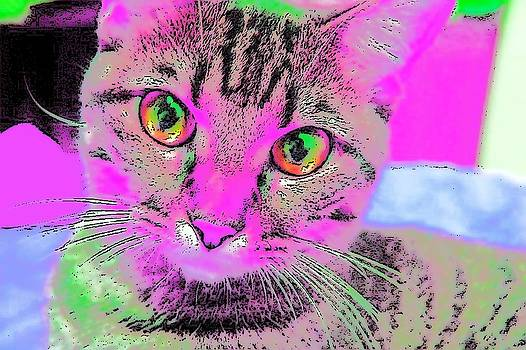 Colorful Cat by Kathy Budd