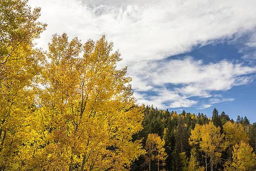 Brian Harig - Colorful Changing Aspens - Divide Colorado