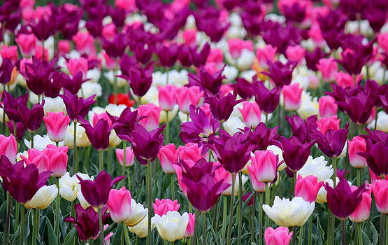 Rosanne Jordan - Colorful Cheers for Spring