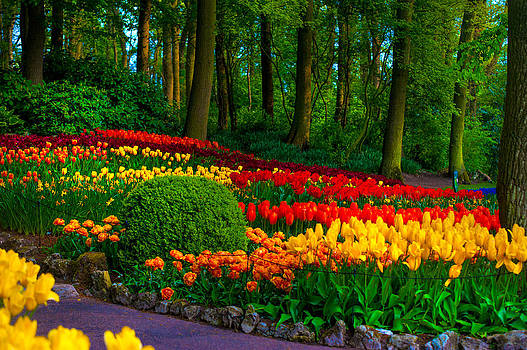 Jenny Rainbow - Colorful Corner of the Keukenhof Garden 4. Tulips Display. Netherlands
