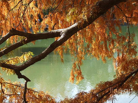 Colorful Fall Bald Cypress by Robert D  Brozek