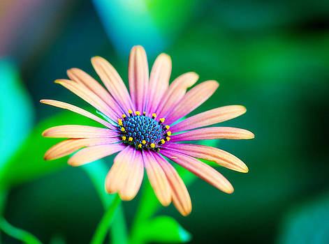 Colorful Flower by Tammy Smith