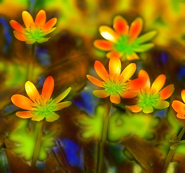 Colorful Flowers by Andy Mars