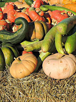 Kimberly Perry - Colorful Gourds