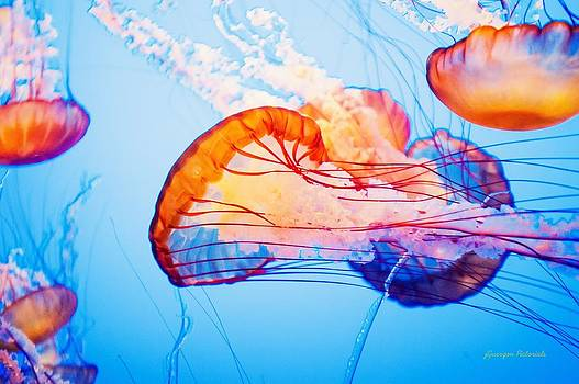 Colorful Jellyfish Dance I by Jorge Guerzon