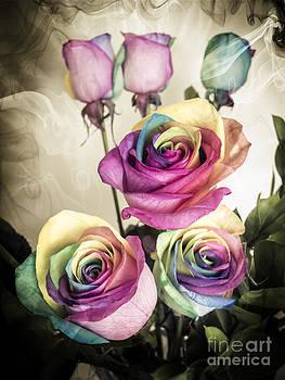 Colorful Kaleidoscope  roses by Linda Matlow