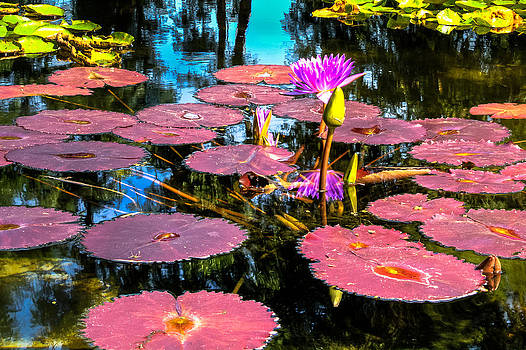 Colorful Lily Pads by Geoff Mckay