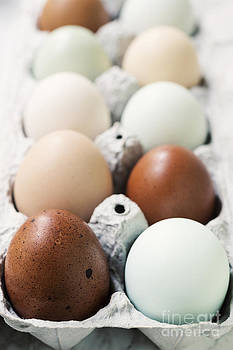Colorful Organic Eggs in a Crate by Brycia James