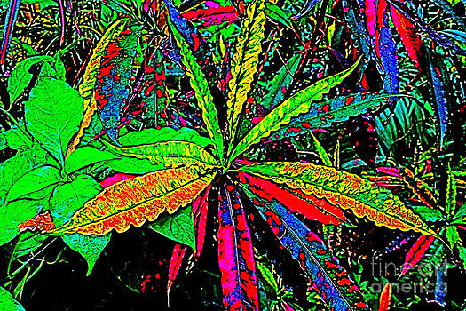 Colorful Plants by Jay Nodianos