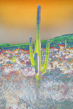 Colorful Saguaro by Jeanne Hoadley