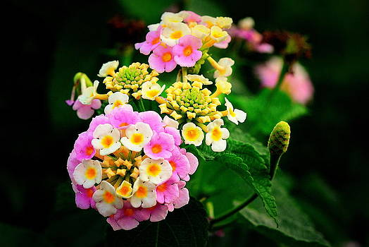 Colorful by Silvie Gunawan