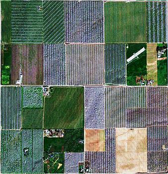 Colorful Skewed Orchards by Mark Van Norman