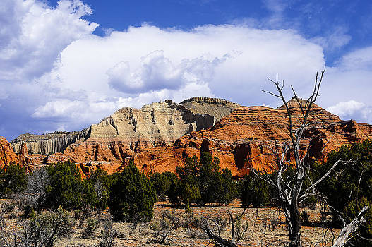 Colorful Southwest by Donald Fink