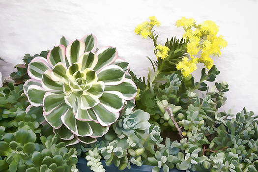 Colorful Succulents by Photographic Art by Russel Ray Photos