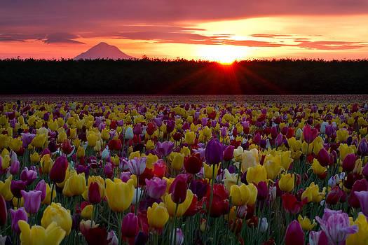 Colorful Sunrise by Teresa Hunt