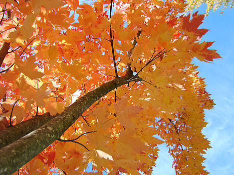 Baslee Troutman - Colorful Trees Art Prints Autumn Yellow Red Leaves
