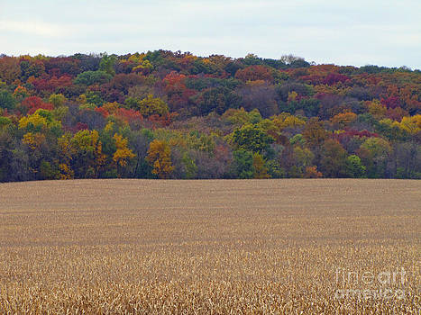 Minding My  Visions by Adri and Ray - Colorful Trees During Fall