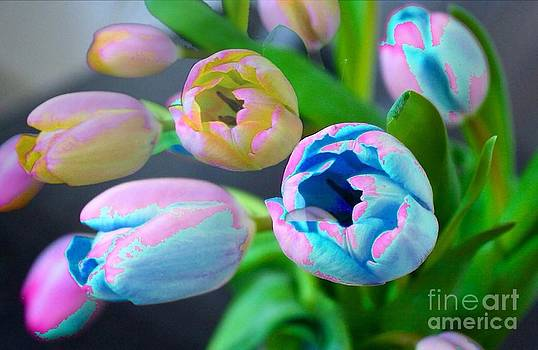 Colorful Tulips by Arelys Jimenez