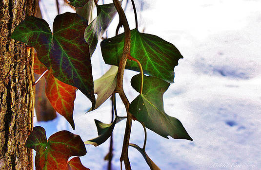 Colorful winter leaves by Mikki Cucuzzo