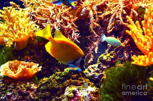 Pravine Chester - Colors of an Aquarium