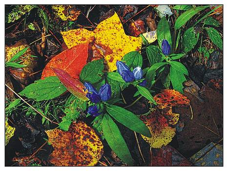 Joe Duket - Colors of Autumn